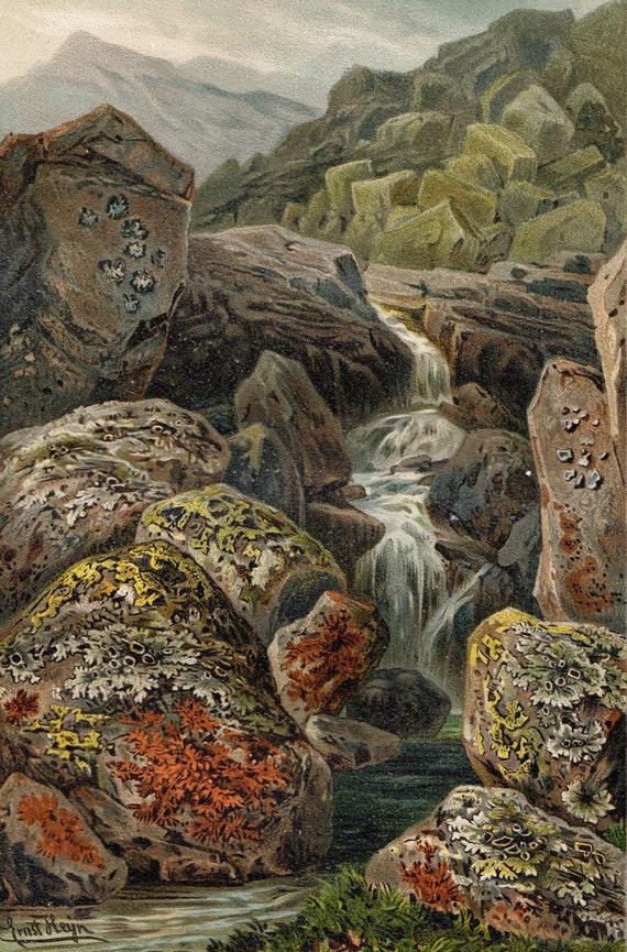 Ernst Heyn Botanical Art Print 1892 Color Lithograph Mosses and Liverworts Alps