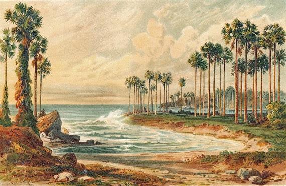 1892 Palmyra Palms Coast Sri Lanka Chromolithograph Botanical Print Natural History
