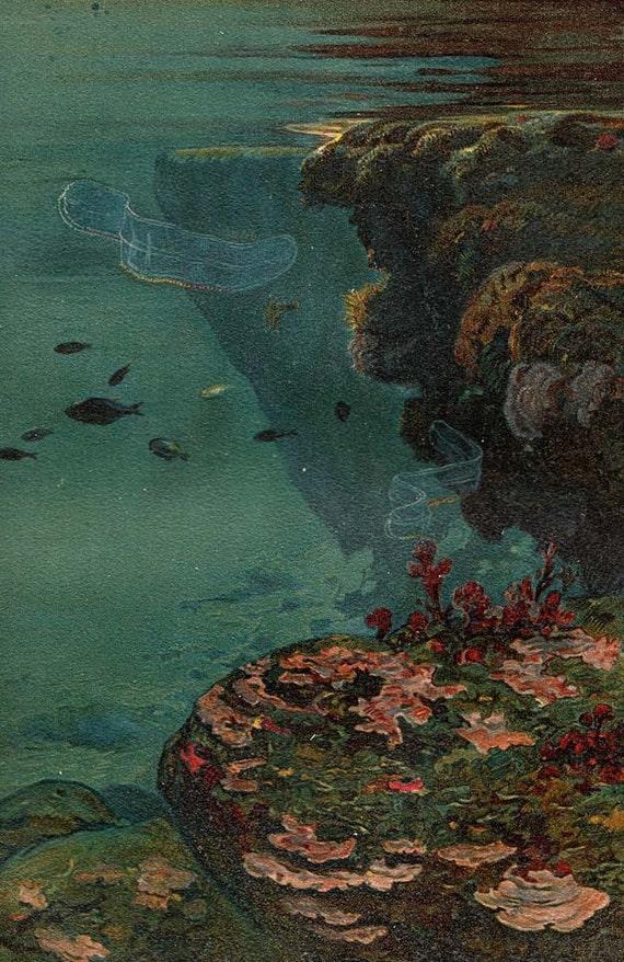 1892 Lithograph Submarine Life Adriatic Sea Antique Marine Biology Print Coralline Algae