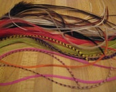 Feather Extention Lot 50 Natural and Bright Colors Micro Beads Included