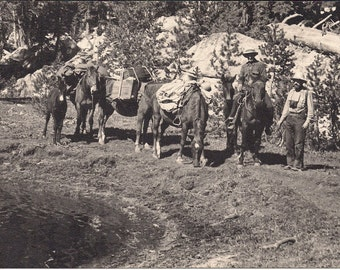 Vintage/ Antique Photo of 2 men, 3 horses and a donkey