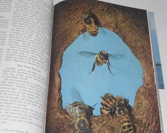 Vintage National Geographic August 1959 Giant Sequoias Honeybees And Vintage Adds - Giant Sequoias - Honeybees