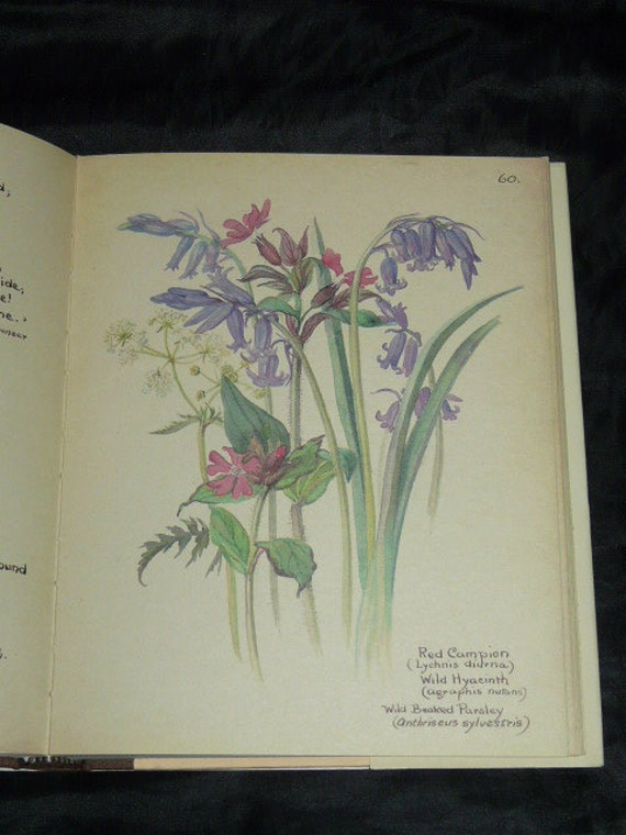 The Country Diary of an Edwardian Lady Edith Holden Wildlife Birds Flowers Watercolor Art Hardcover Book butterfly dragon fly woodpecker