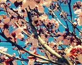 iPhone Wallpaper. Photography, Cherry Blossoms, Shabby Chic, Dreamy, Whimsical.