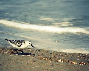 Coastal Decor Beach Photography | Beach House Decor | Ocean Wall Art Print | Seabirds, Outer Banks | Beach Theme Decor | Large Wall Artwork