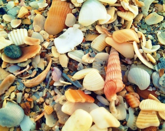 Beach, Seashell Photography. Sea Shells Photo Art Beach Decor - Plenty