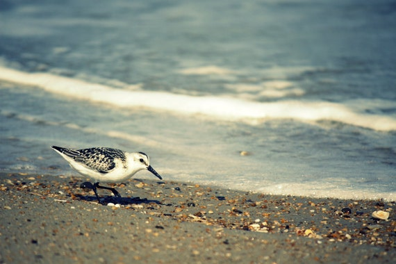 Wall Art Beach Photography | Beach House Decor | Aquamarine Ocean Waves, Seabirds on Outer Banks Beach | Beach Theme Decor | Beach Artwork