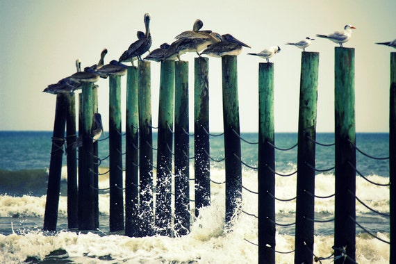 Beach Photography   Beach Art Print Pelicans on Pilings   Nautical Wall Decor   Beach Wall Art Home Decor Ocean Waves   Decorative Wall Art