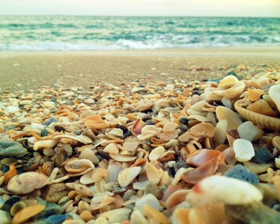 Coastal Beach Seashell Photography | Turquoise Sea, Ocean Waves | Beach Wall Art | Beach Home Decor | Ocean Art Print Coastal | Abundance