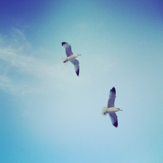 Nature Photography | Beach Photography Seagulls | Ocean Print Photography | Beach House Art Blue | Beach Wall Art | Coastal Art Summer | Fly