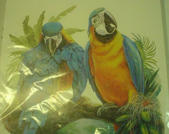 Blue and Gold Macaw Parrot Iron On Transfer