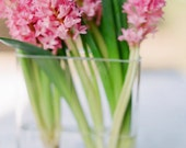 Pastel - Hyacinth in Vase 2