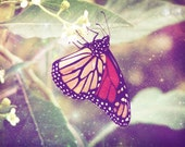 Butterfly daydreams, monarch, surreal, dreamy, art, magical, nature, butterflies, purple, lavender