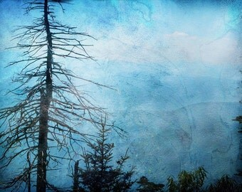 Smoky Mountains,Man Cave,Photography Poster, Large 20x30,Nature art,blue,Fathers Day,trees,Fine art,Tennessee,Clingmans Dome