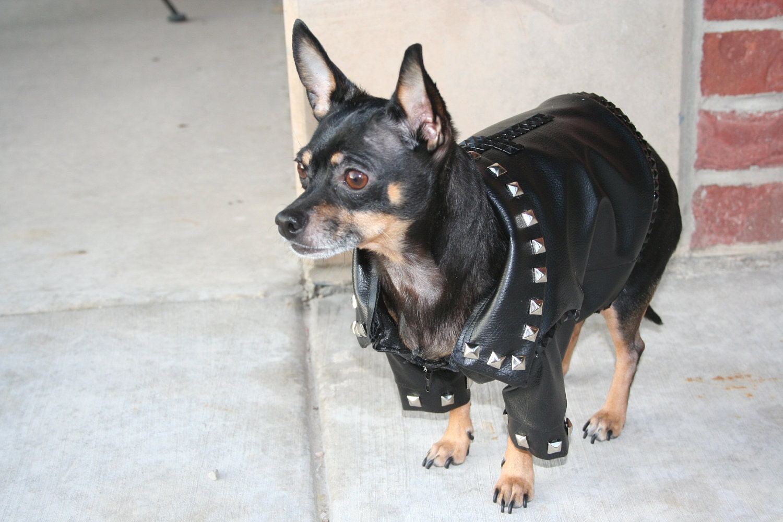 Leather jacket for dogs - Leather Dog Coats And Jackets Jacket