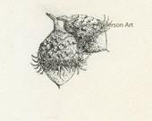 Acorns Fine Art Card