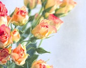 Photo Print - Sunny Roses- photography flower blossom pink gift wall decor
