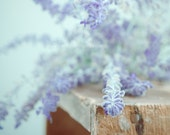 Print - Violet Fog - photography autumn mauve violet botanical wood crate wall home interior decor picture