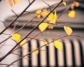 Autumn In France - fine art bohemian photography print autumn fall Europe chalet woodland nature yellow black white stripe