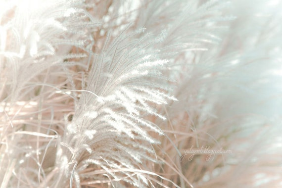 Silver Light - romantic shabby chic valentine gift for her fine art print whimsical dreamy nature photography botanical floral home decor
