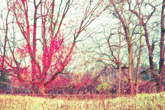 Ruby Winter - nature photography woodland dreamy home decor print picture red flame hot pink tree landscape gift bright colors
