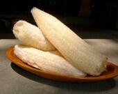 Luffa/Loofah Sponge Gourd Seeds (20)