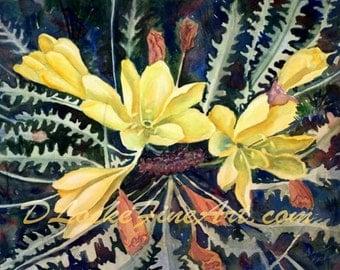 YELLOW DESERT PRIMROSE     Print of original watercolor painting.