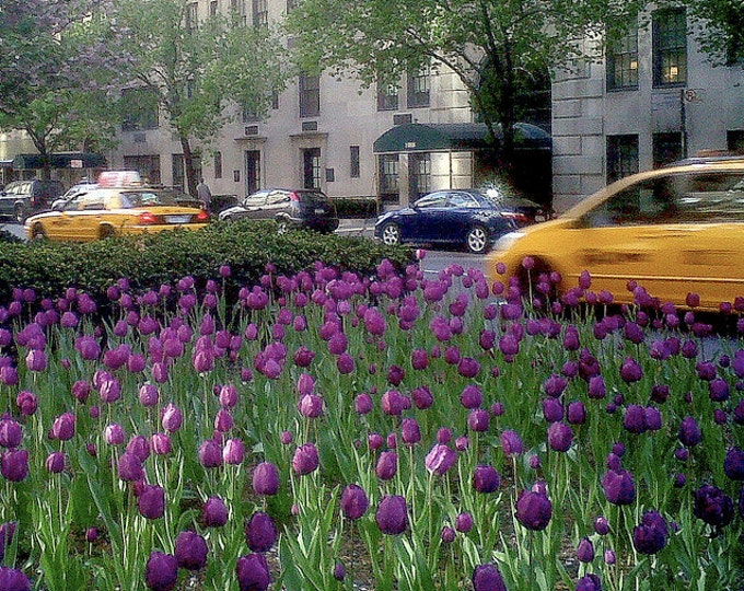 Taxis & Tulips, NYC