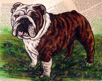 English Bulldog Brindle 8x10 Print