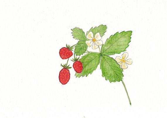 Wild Strawberries Watercolor Painting