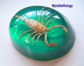 Vintage Green Oval Scorpion Paperweight  1970s