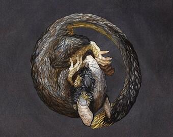 Hibernating Dormouse | Watercolor | Archival Print
