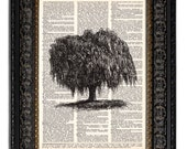 WEEPING WILLOW TREE art print book page print on dictionary page 1st Anniversary Gift Wedding Gift Paper Anniversary Gift for Husband