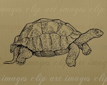 Turtle Clip Art, Royalty Free, Commercial Use for your projects for sale, No Credit Required