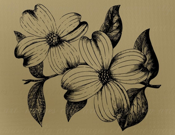 Vintage Dogwood Flowers Clip Art Royalty Free by ImagesClipArt