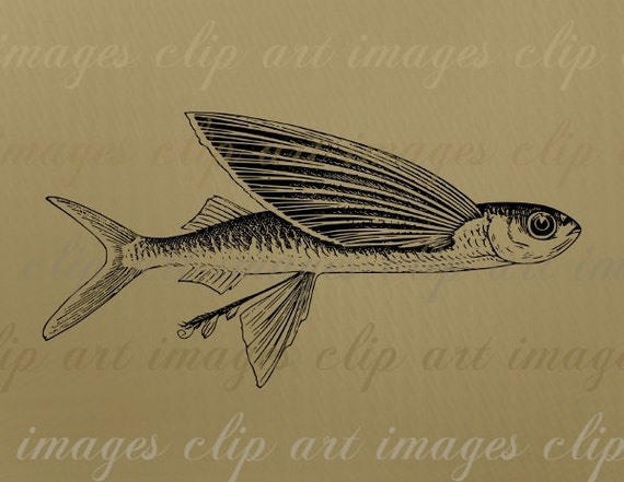 Flying Fish Clip Art, Royalty Free Vintage Illustration, Digital ...