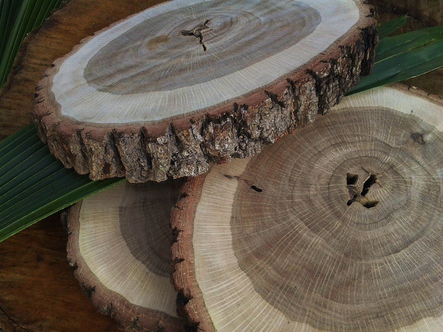 Treasury item 12 rustic oak tree trunk slice for Tree trunk slice ideas