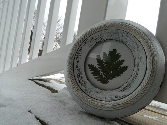 "Real Fern in Vintage Round Wooden Frame painted in white and distressed ""A little Green in the Winter"""