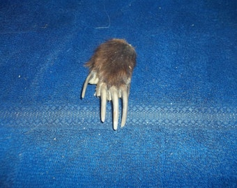 Badger foot paw with claws nail taxidermy real animal bone parts