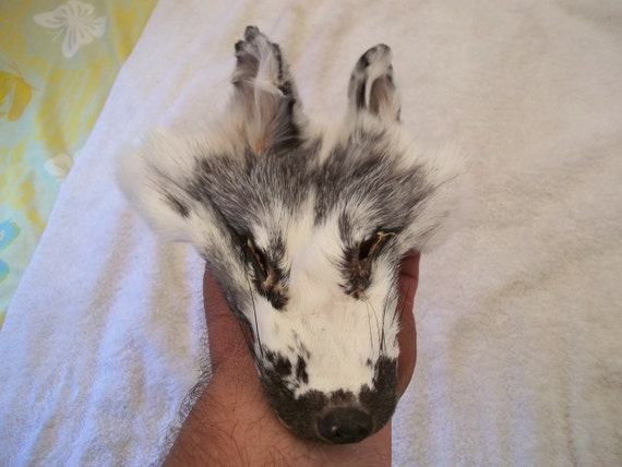 real animal fur Tanned blue marble fox face head parts