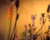 Orange Flower 2  Fine Art Digital Photo 8x10