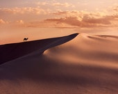 White Sands, New Mexico with Camel 8 2703 Fine Art Digital Photo 8x10