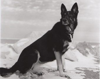 Vintage Original Black and White Portrait of Roxanne-A German Shepherd Dog in front of Snowy Lake Michigan circa 1985
