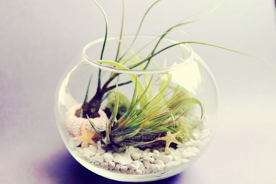 Sea Inspired Fishbowl Terrarium // Air Plants in Glass Bowl Wedding Favor Decor Gift DIY Minimalist Garden tillandsia modern centerpiece
