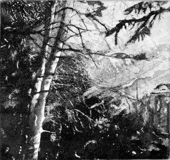sunlight through trees black - photo #20