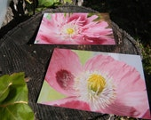 Pink Purple Poppy Prints 4x6- Set of 2