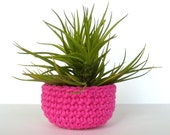 RESERVED for Katie - Montana Air Plant in Colorful Pink Flambe Table Top Bowl