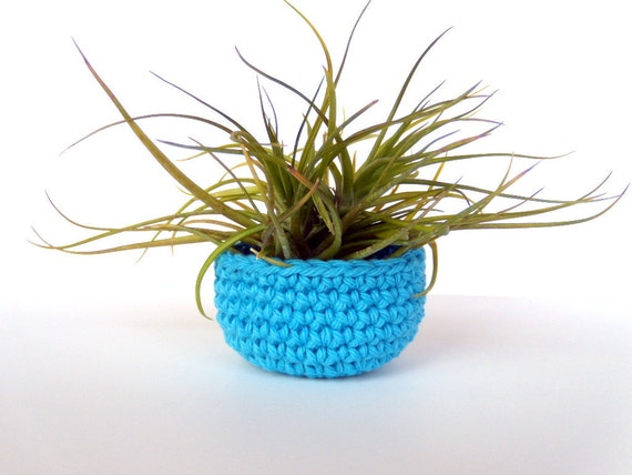 Turquoise Bowl with Montana Air Plant