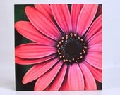 Pink Gerbera Daisy - Original 8x8 digital fine art on cradled wood panel