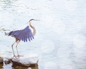 Heron about to Fly - 8 x 10 Fine Art Print - Featured on Etsy's Front Page